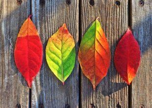 herfst-blaadjes